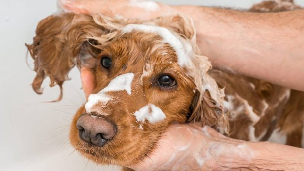 Prendre soin de votre animal de compagnie