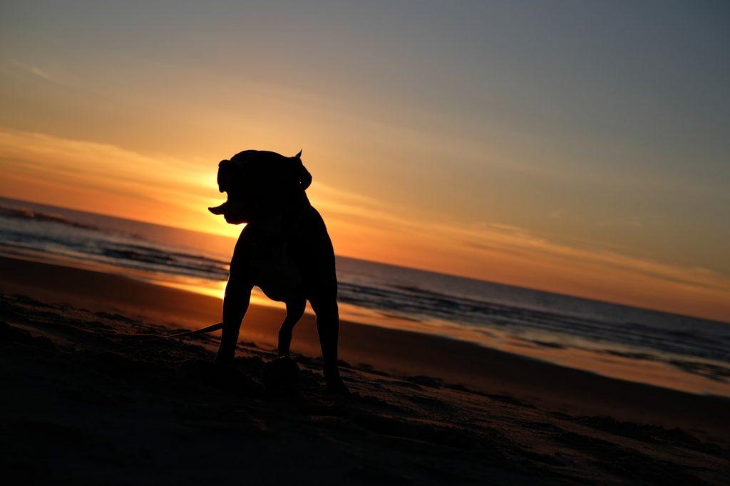 Silhouette d'un chien au couché de soleil