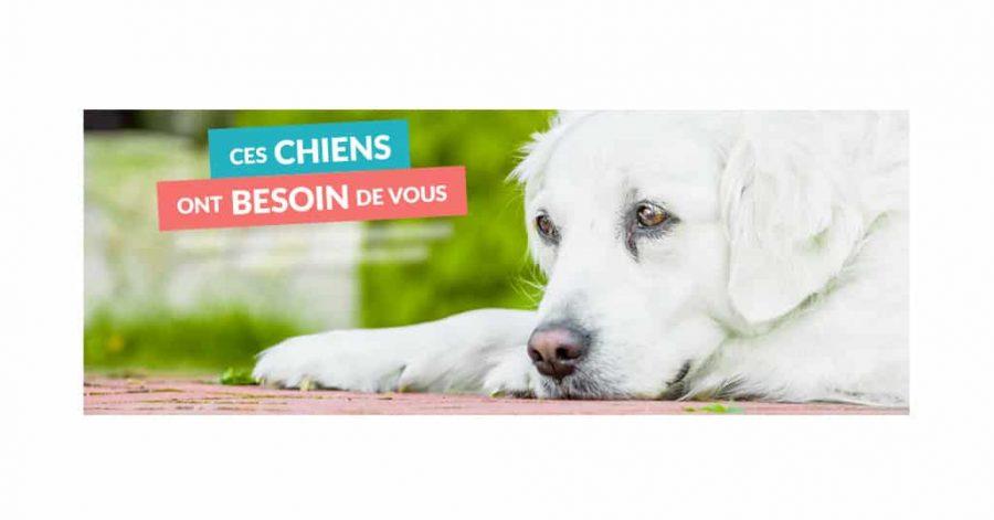 Soschienperdu.com, le site au service des chiens et de leur maître