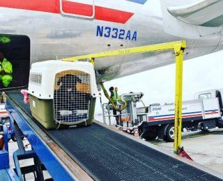 Voyager en avion avec son Chien | Guide