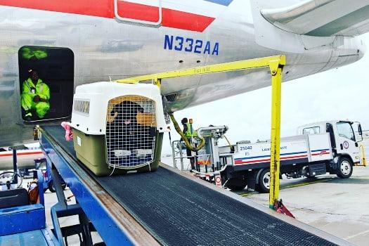 Prendre l'avion avec son chien : conseils et formalités