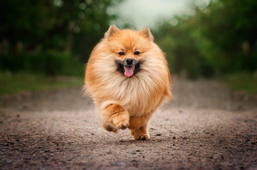 15 races de chiens les plus populaires en France