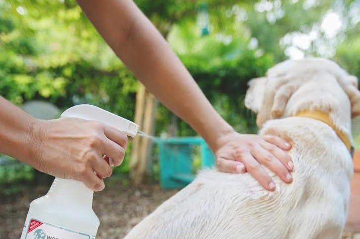 spray au vinaigre sur chien