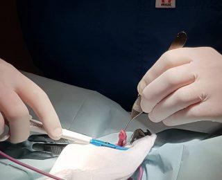Stérilisation du chat : prix, infos et conseils