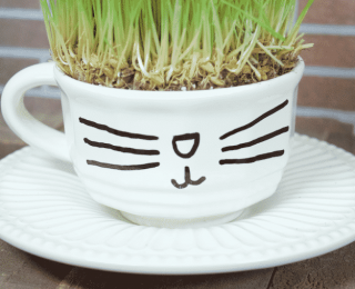 10 jolies idées pour cultiver l'herbe à chats