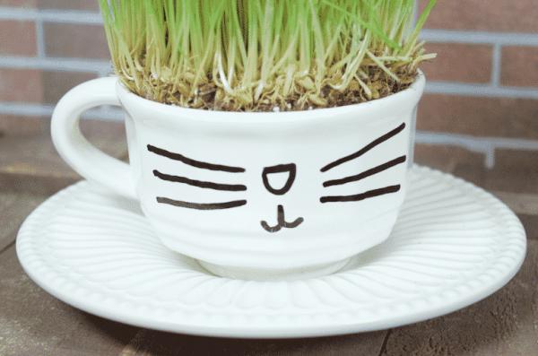 Herbe à Chats : 10 idées pour la faire pousser en pot