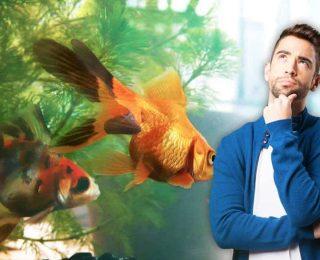 Quel aquarium pour son poisson rouge ?