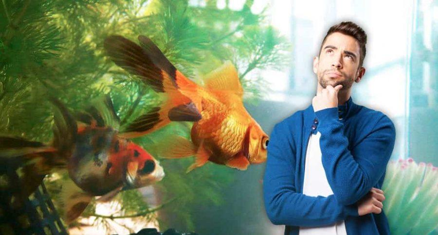 Quel aquarium choisir pour son poisson rouge ?