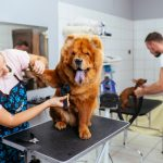 Comment faire accepter le toiletteur à son chien ?