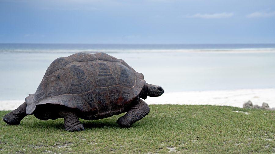Quels animaux voir sur l'île Maurice ?