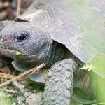 Ma tortue attend des petits, que faire ?