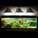 Éclairage LED pour aquarium : avis, conseils et infos