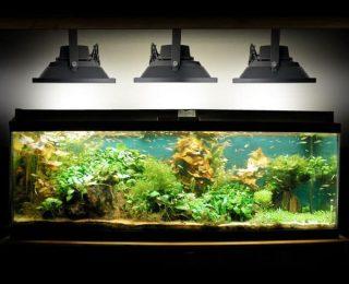 Éclairage LED pour aquarium, conseil et infos