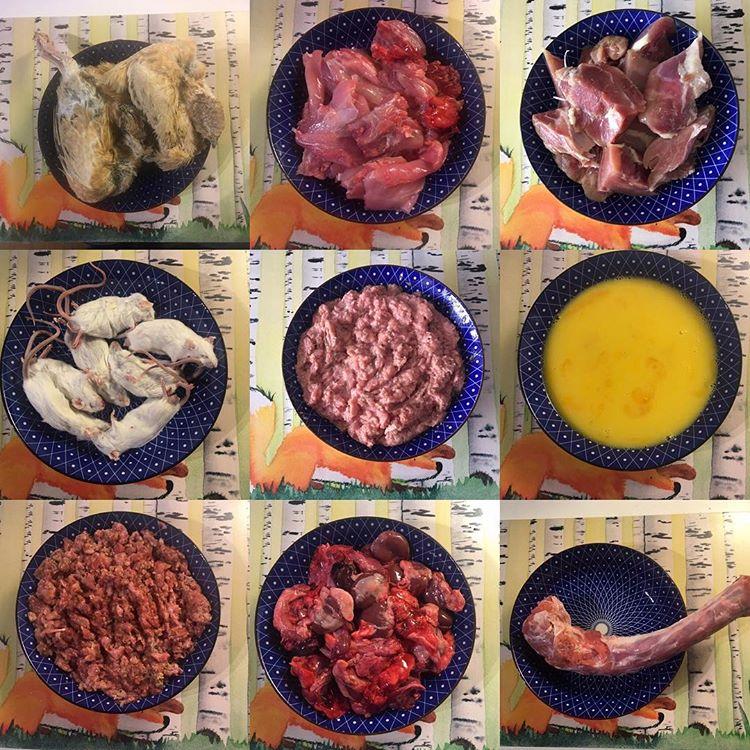 viande crue furet