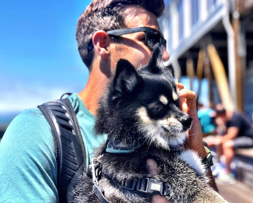 voyager chien