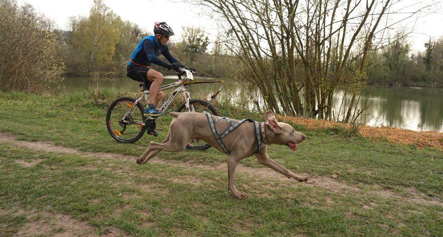 Vélo avec mon chien : conseils & astuces