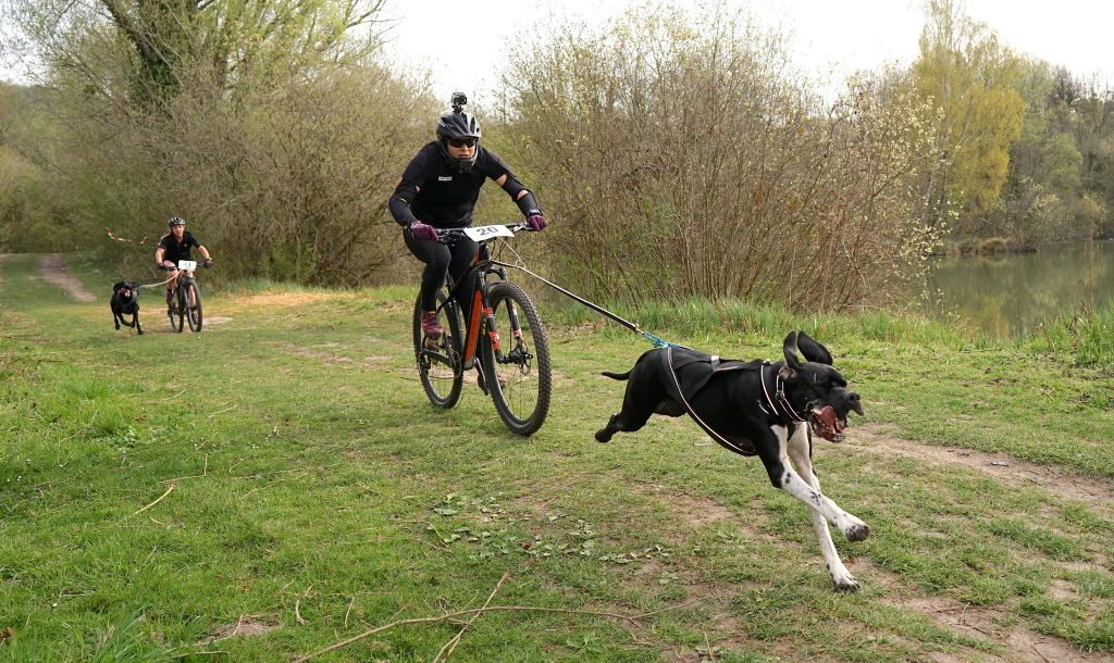 Vtt et chien